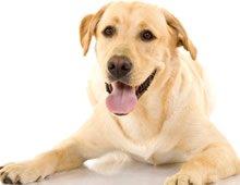 Dogs and Probiotics?