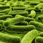 Is A Higher CFU Count Better In Probiotic Supplements?