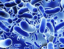 Matching The Perfect Probiotic Strain To YOUR Specific Ailment